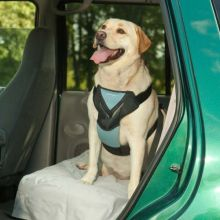 Dog Travel Harness (Color: Blue, Size: Large)