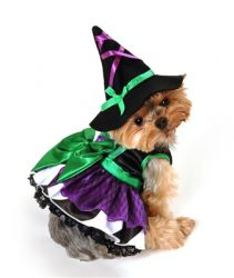 Scarey Witch Costume (Size: Small)